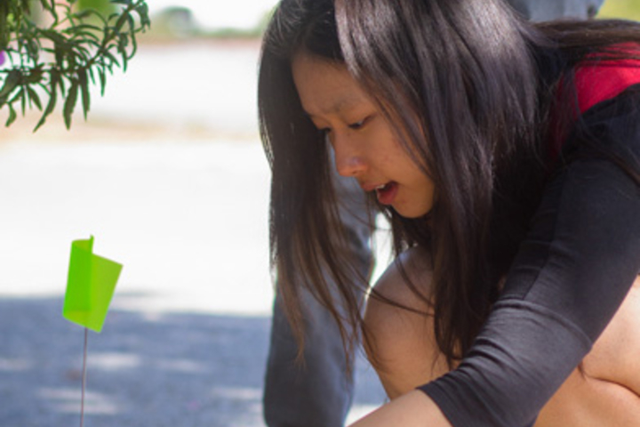 Student Vivian Kong observed ants on campus as part of a Thinking Matters course on networks.