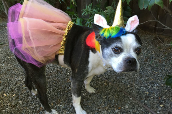Dog in unicorn costume